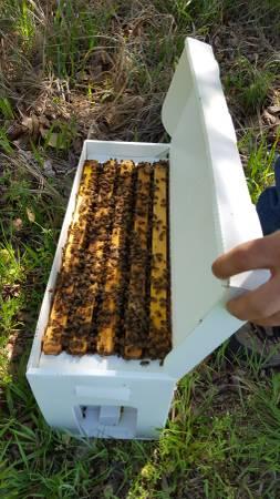 Honeybee Nuc